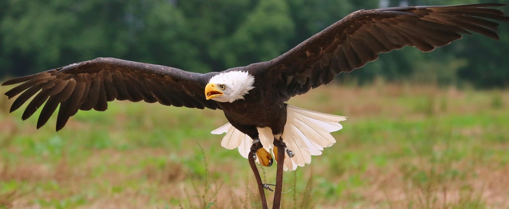 Republican Leaders Target the Endangered Species Act and 4 More Stories to Know Jan. 17
