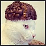 The Princess Leia