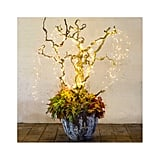 Jazz up a potted plant with cascading lights.