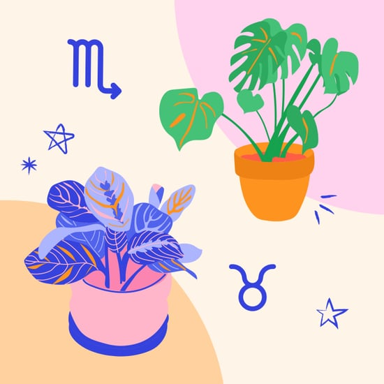 The Best Houseplant For Every Zodiac Sign