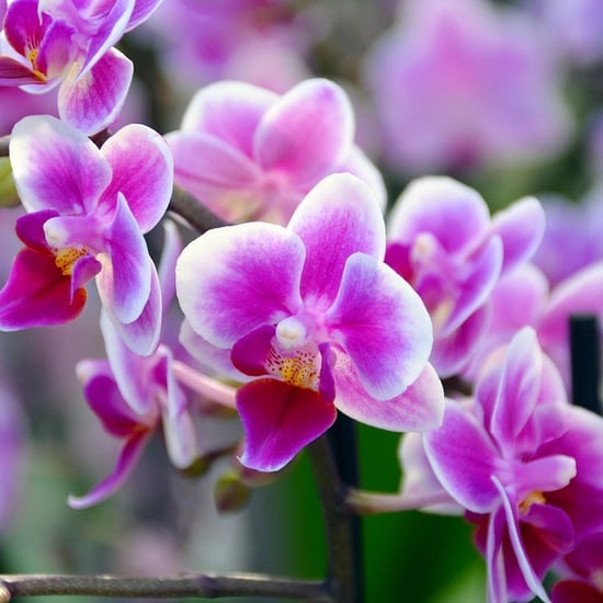 Singapore Names Orchid After UAE Sheikha