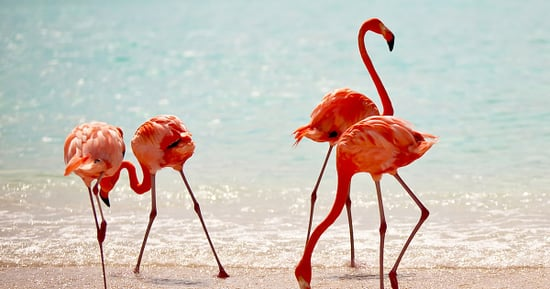 Aruba Vacation Giveaway Sweepstakes: Enter for a Chance to Win!