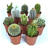 Cactus Mix 10 Plants