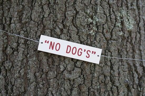 This Tree Belongs to No Dog!