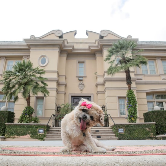 Marnie the Dog's Los Angeles Airbnb