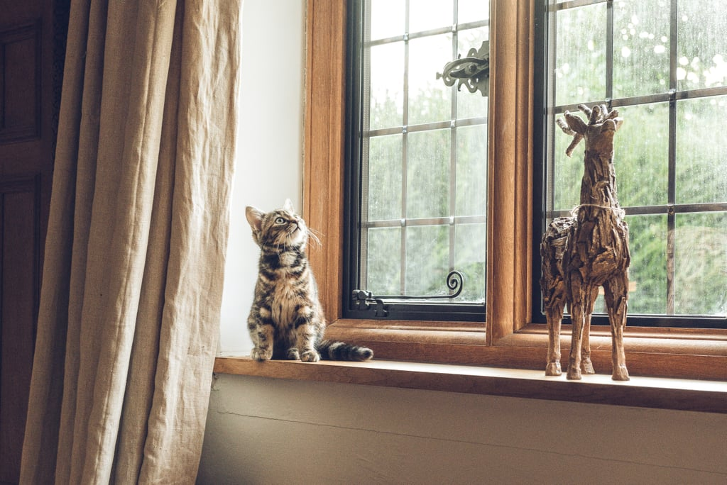 This cat has some growing to do if it wants to match that deer.