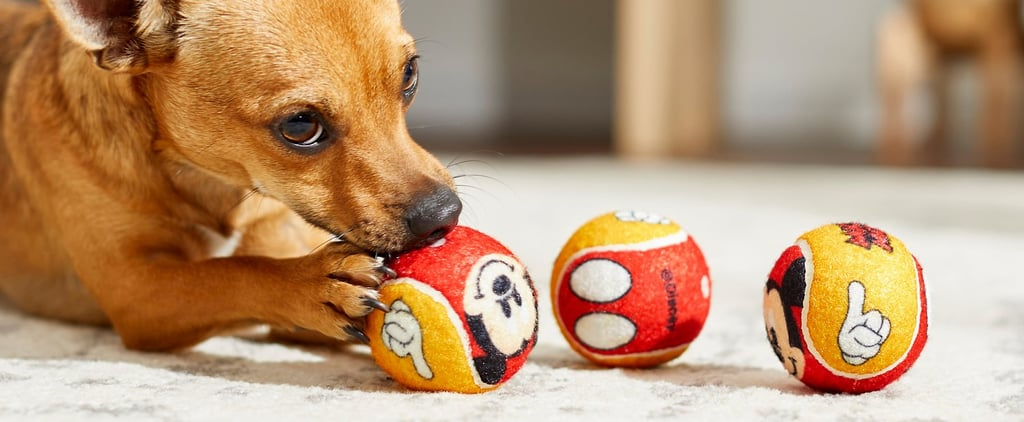 You Can Find the Best Disney Dog Toys at Chewy