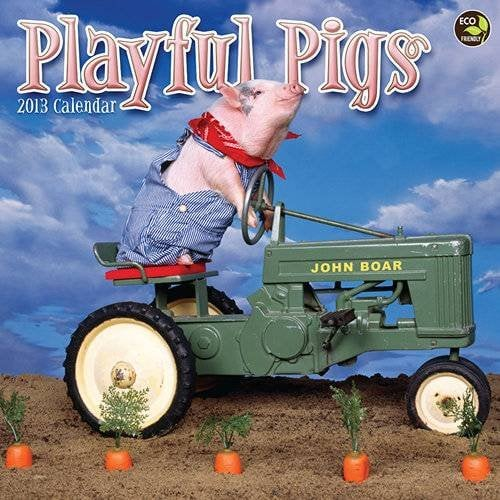 Playful Pigs