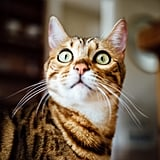 We need to know what this cat is so wide-eyed over!