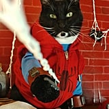 Cat Cosplaying as Spider-Man