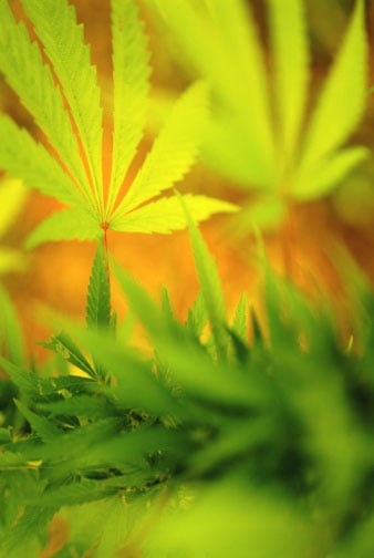 Hot Button: Legalize Marijuana?