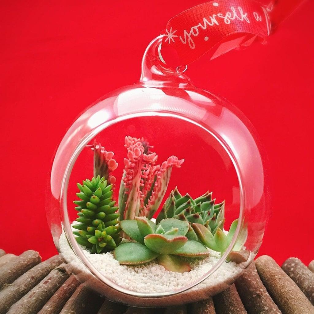 Succulent Christmas Ornament
