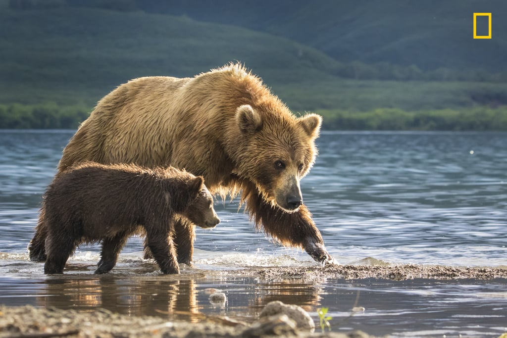 A mother bear and a cub