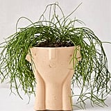 Hector Face Planter
