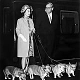 Queen Elizabeth II with her corgis in 1969.