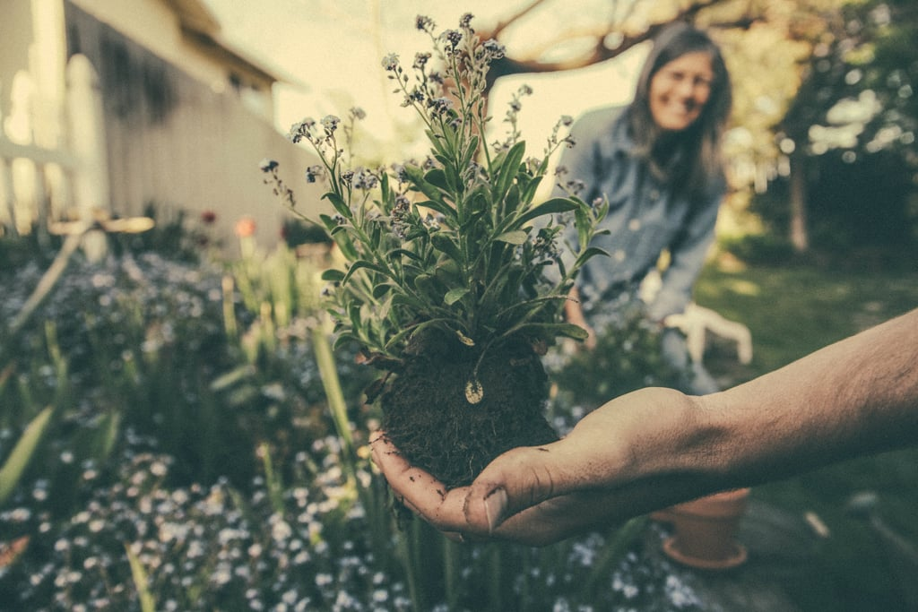 Plant some flowers in your garden.