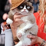 Grumpy Cat Channeled Pharrell and His Hat at the MTV Movie Awards
