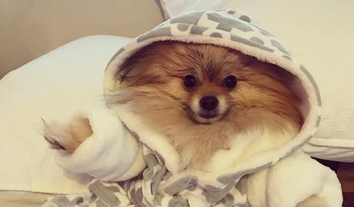 Cute Photos Of Dogs Wearing Robes Popsugar Family Browse a wide range of dog images and find high quality and professional pictures you can use for you can find photos of bulldogs, retrievers, beagles and of course puppies. cute photos of dogs wearing robes