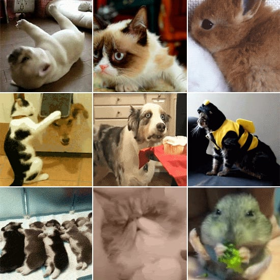42 Funny and Adorable Pet GIFs