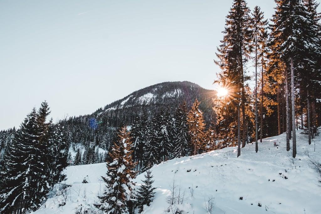 Capricorn (Dec. 22 to Jan. 19): Aspen