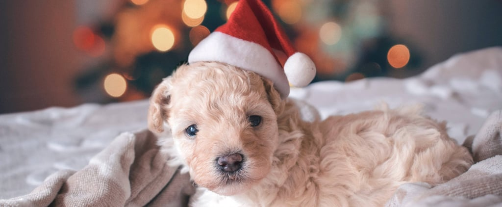 Why You Shouldn't Give Kids a Puppy For Christmas
