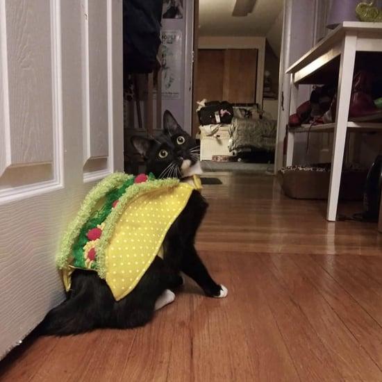 Cat Taco Halloween Costumes