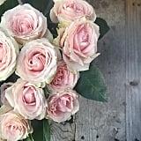 Pink Hue Bliss