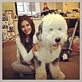 Victoria Justice cuddled with a giant fluffy dog. Source: Instagram user victoriajustice