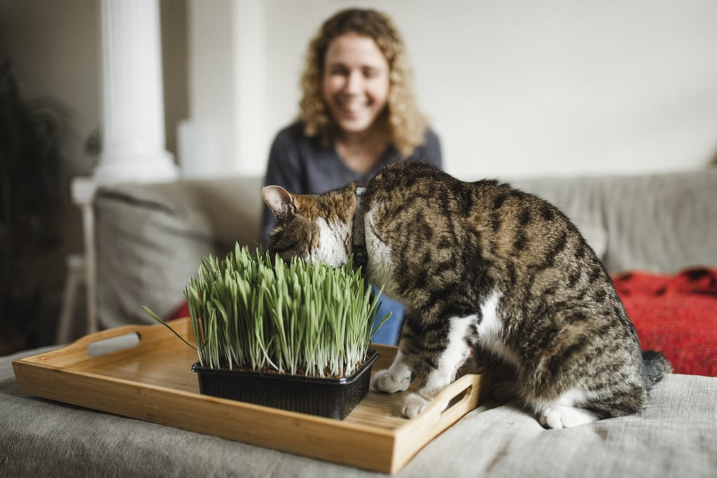 House Plants That Are Safe For Cats to Eat