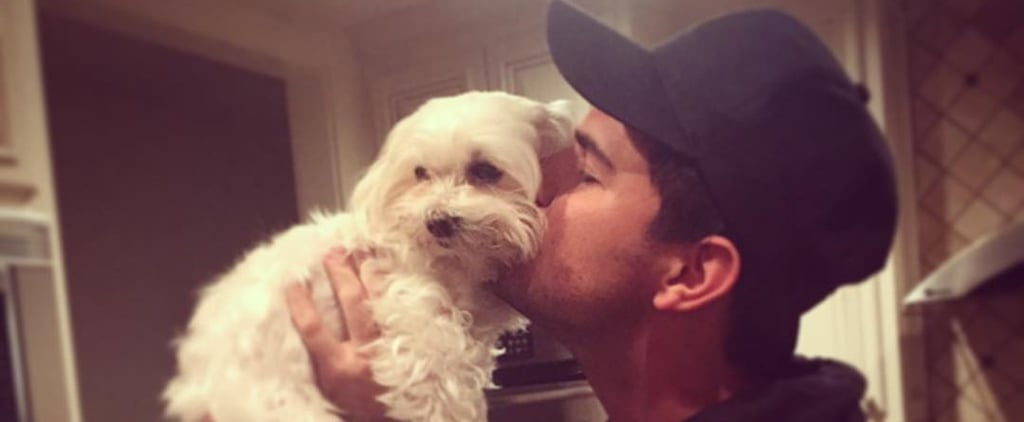 "Taylor Lautner Mourns the Death of His Dog in an Emotional Post: ""You Brought So Much Joy"""