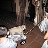 Participating pets