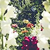 Grow a garden.