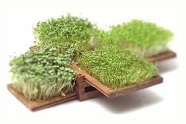 Happy Earth Day! Get Yourself an Edible Miniature Garden