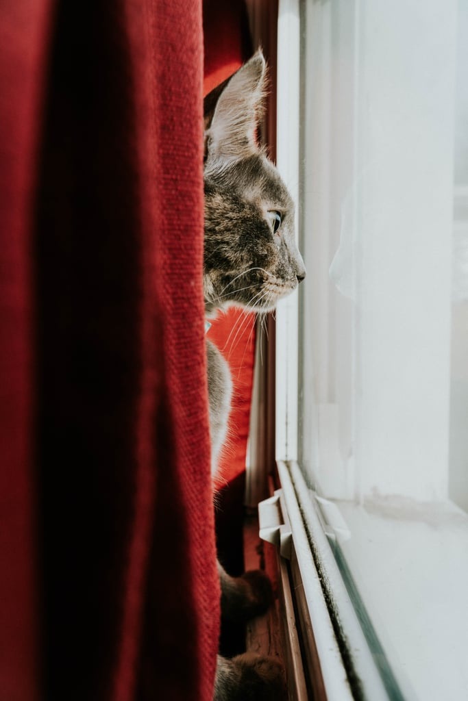 Spying on the neighbors.