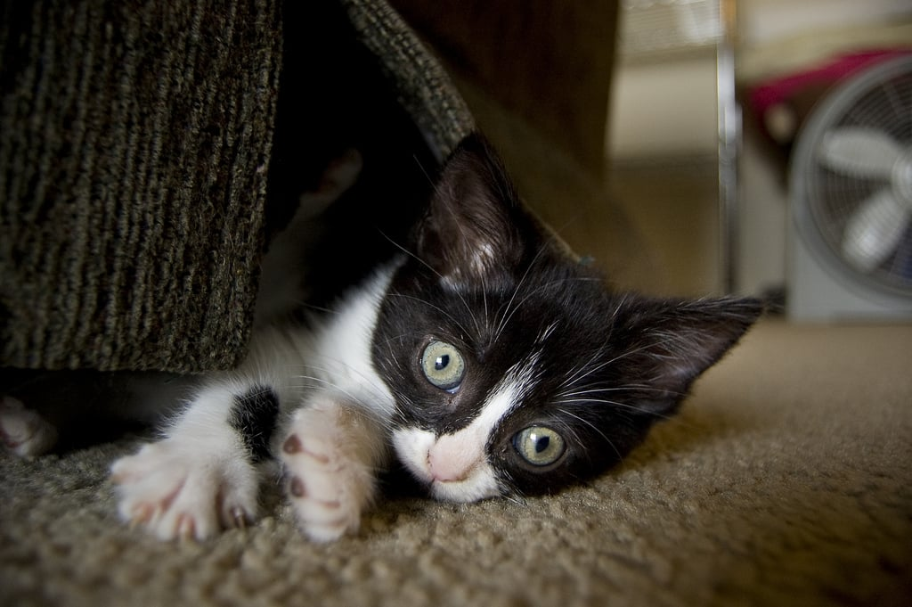 I am the Creature That Lives Under the Couch! Source: Flickr user trieu88