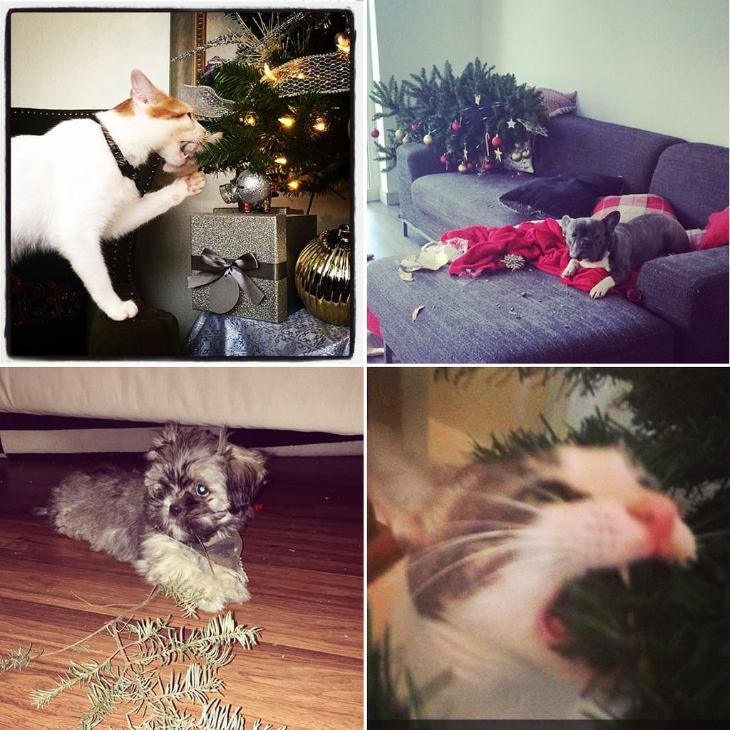 Pets Ruining Christmas Decorations | POPSUGAR Pets
