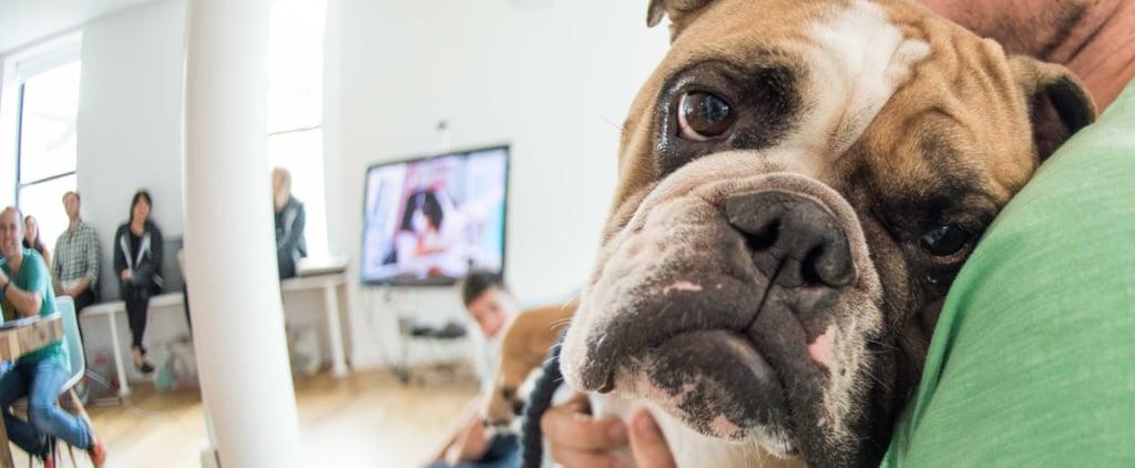 Dog-Friendly Workplaces