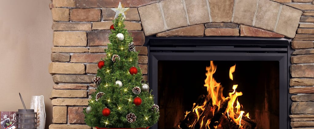 Best Live Tabletop Christmas Trees 2020
