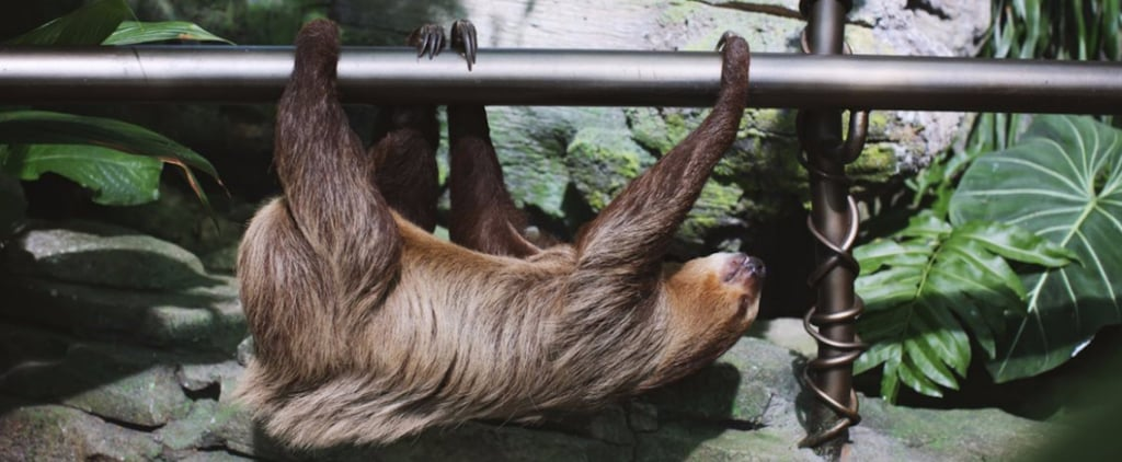 Yes, National Sloth Day Is a Thing and Here's Where to Hang Out With Them in Dubai