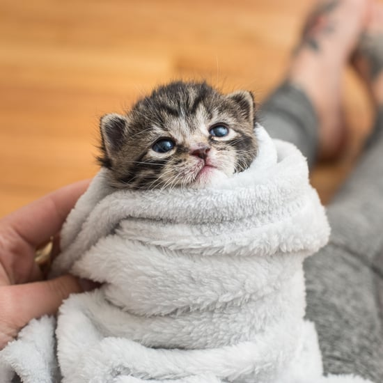 Photos of Kittens