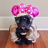 The Most Fashionable Dogs on Instagram