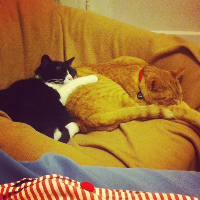 Copy Editor Emelie Battaglia's black and white tuxedo cat is appropriately named Comma, and the orange tabby, Dante, is the man of the house.