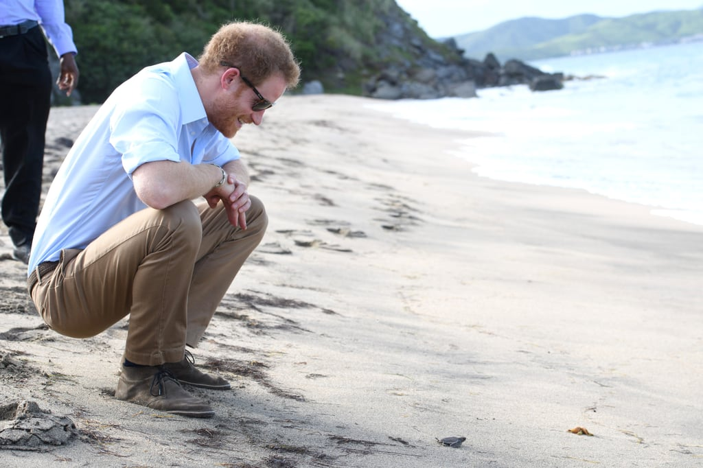 During his 14-day tour of the Caribbean in November, Harry looked like a giddy like kid as he released baby turtles into the sea at Lovers Beach in Nevis.
