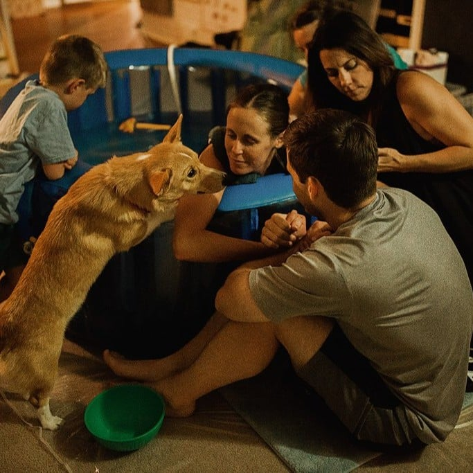 Most Heartwarming Pet Moments of 2018