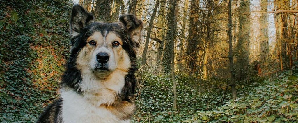Heartbreaking Post About How Quickly Dogs Age
