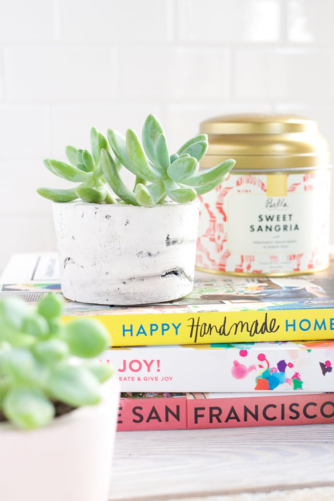 How To Care For Succulents Popsugar Home