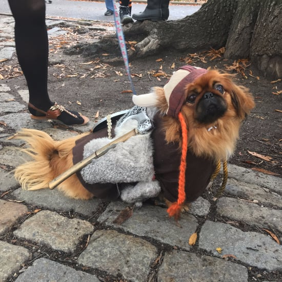 New York City Halloween Dog Parade