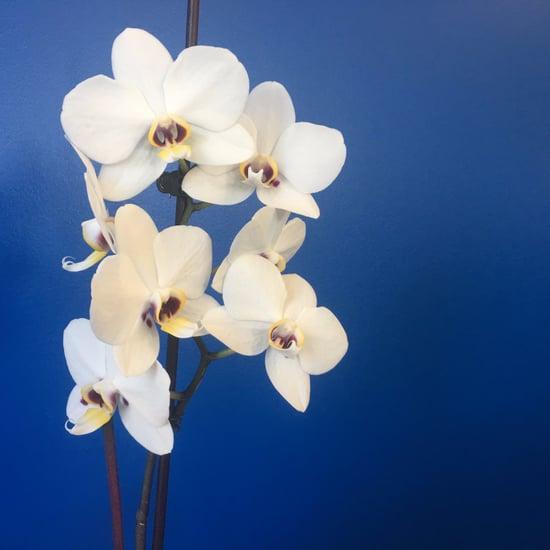 Rebloom Orchids With Tea
