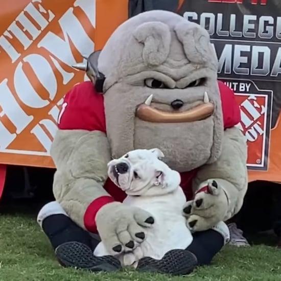 This Video of a Bulldog Meeting a Bulldog Mascot Is So Pure