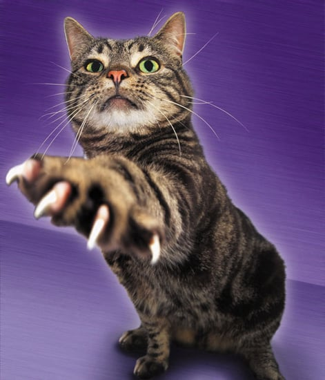 To Declaw or Not Declaw?